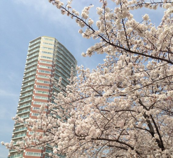東中野ユニゾンモールを見上げる桜